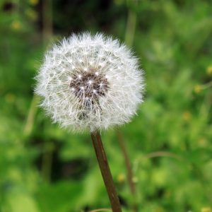 Seasonal Allergies? Take Care Of Your Smile